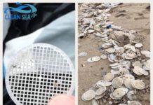 dischi, filtri, lazio, campania, tirreno, mediterraneo, mare, inquinamento, ritrovamenti, clean sea life, arpa, cnr, lamma, plastica, legambiente